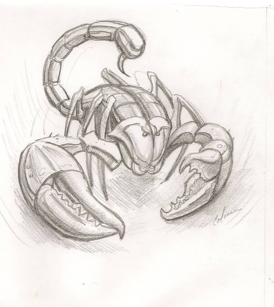 Scorpion Tattoo Sketch (4)
