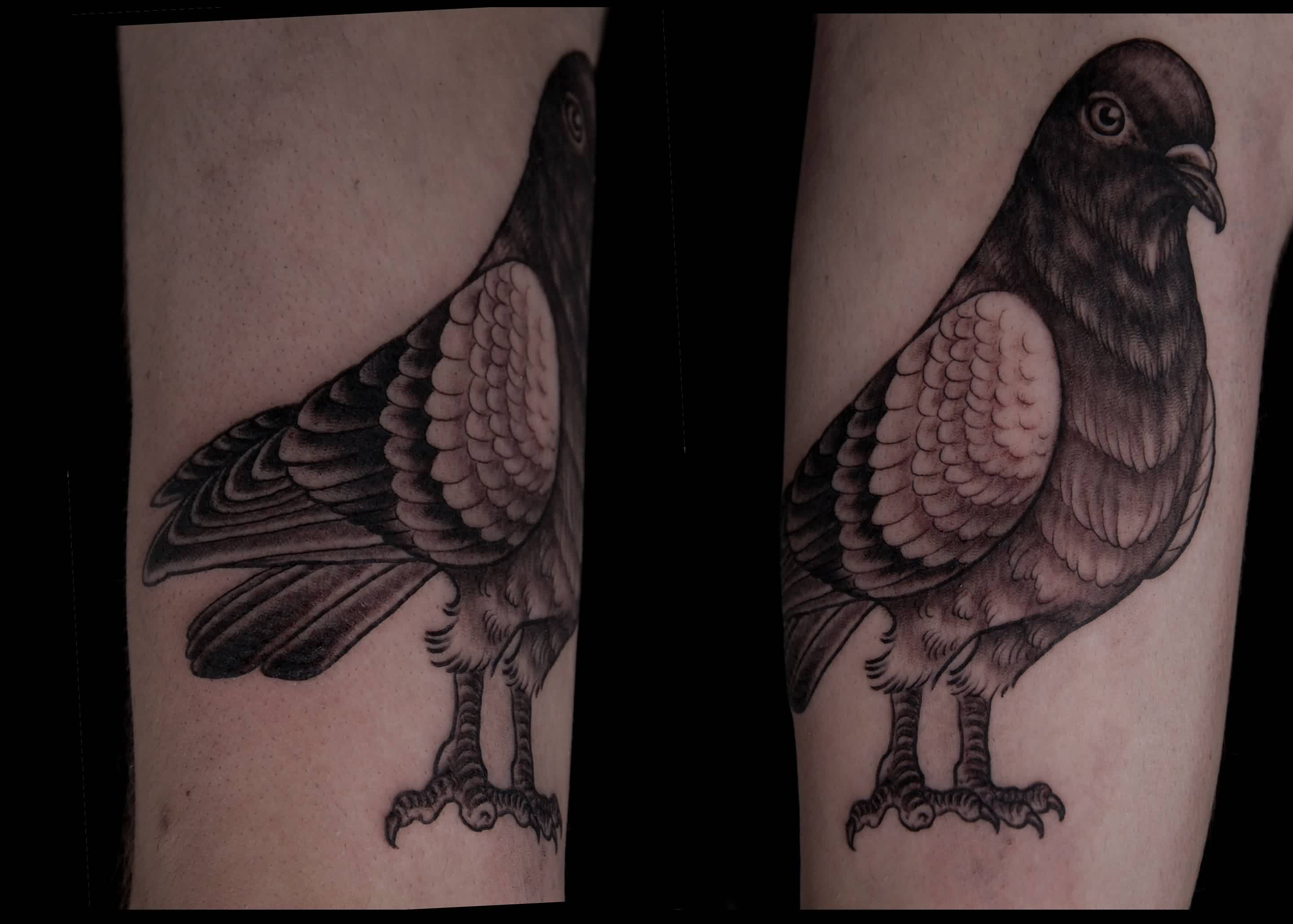 Sitting Pigeon Tattoos