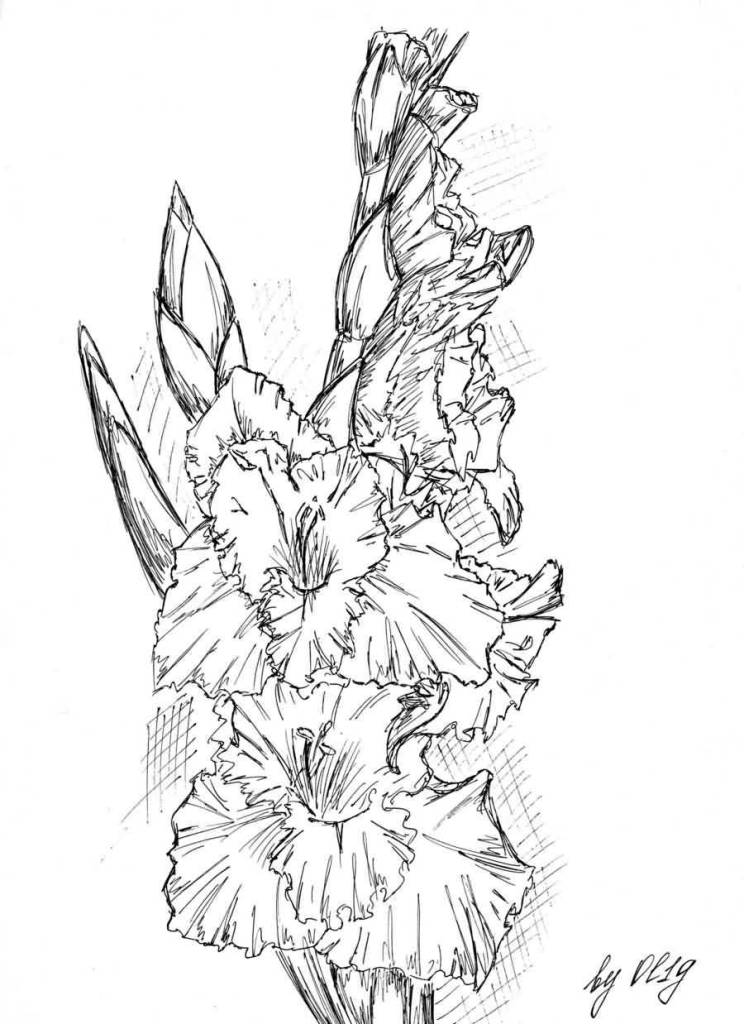Amazing Nice Gladiolus Flower Tattoo Design Stencil