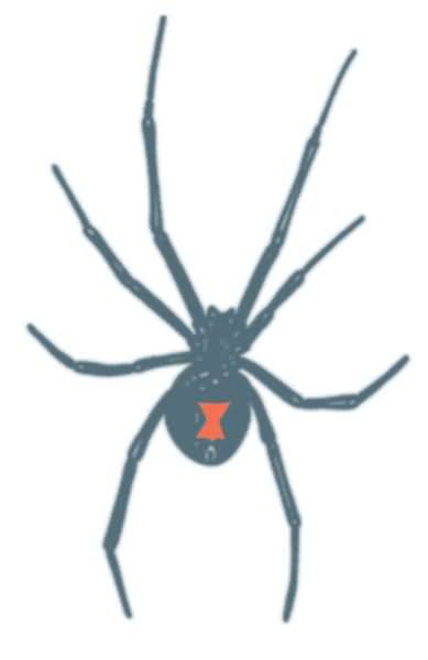 Amazing Simple Black Widow Temporary Tattoo Stencil