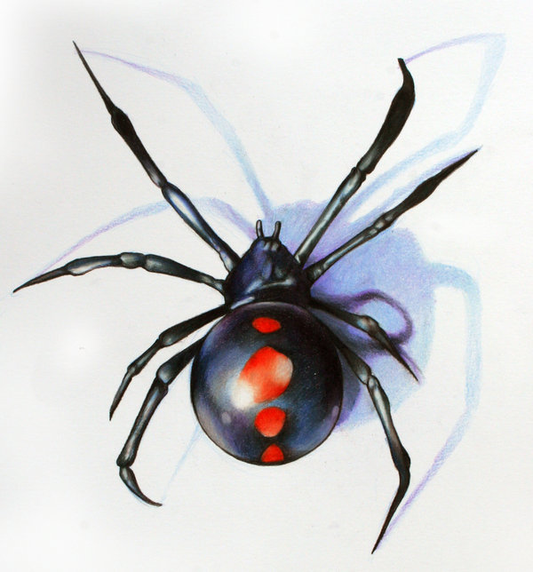 Awesome Black Widow Tattoo Design On Paper