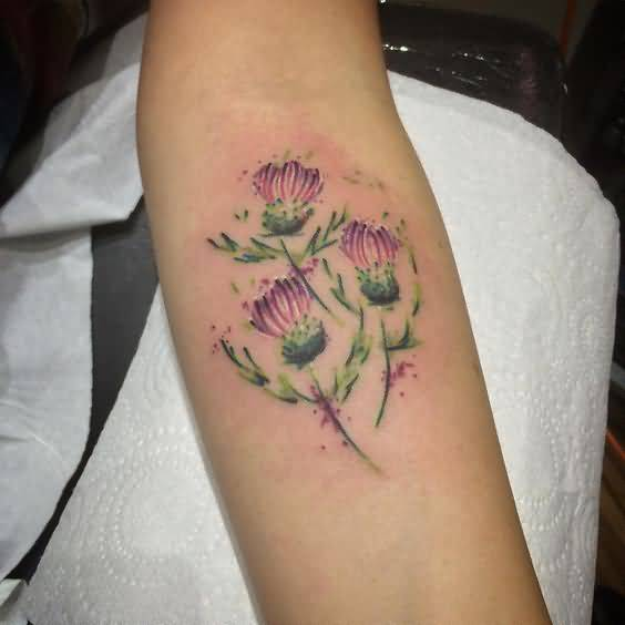 Beautiful Watercolor Scottish Thistle Tattoo For Forearm