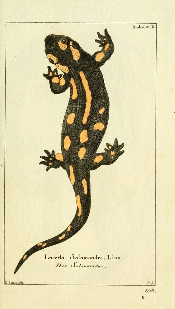 Black And Yellow Reptile Lizard Tattoo Design