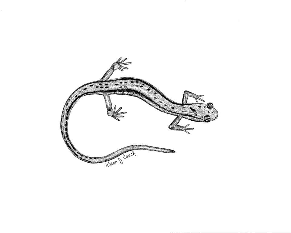 Black Dots Salamander Tattoo Drawing