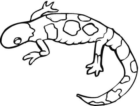 Black Shade Drawing Of Salamander Tattoo