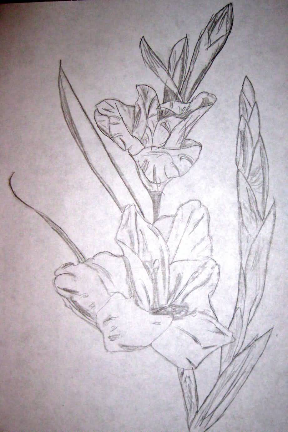Grey Ink Nice Gladiolus Flower Tattoo Stencil