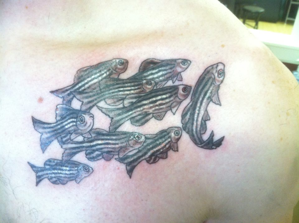 Men Show Nice Ichtyology Science Tattoo On Collarbone
