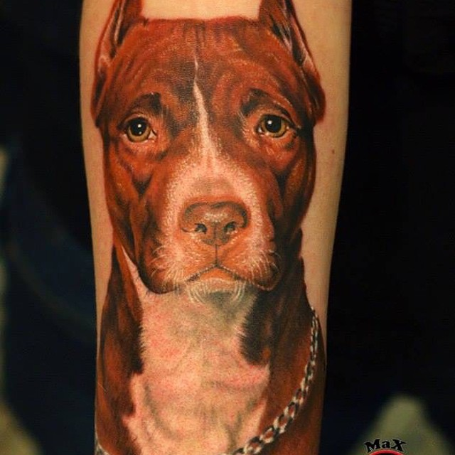 Nice Brown Color Pitbull Realistic Face Tattoo