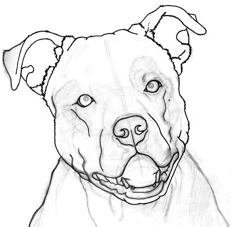 Nice Stencil Of Open Mouth Pitbull Tattoo