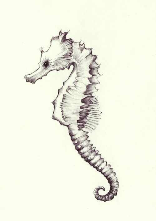 Nice Stencil Of Simple Sea Horse Tattoo