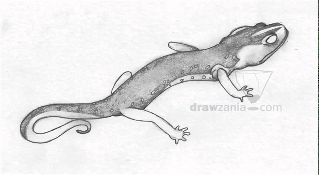 Scary Salamander Tattoo Drawing