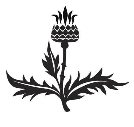 Scottish Thistle National Flower Black Ink Tattoo