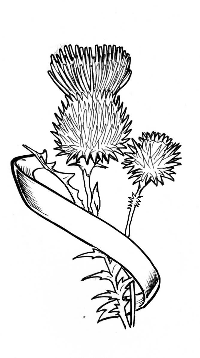 Thistle Scottish Tattoo Of Simple Banner