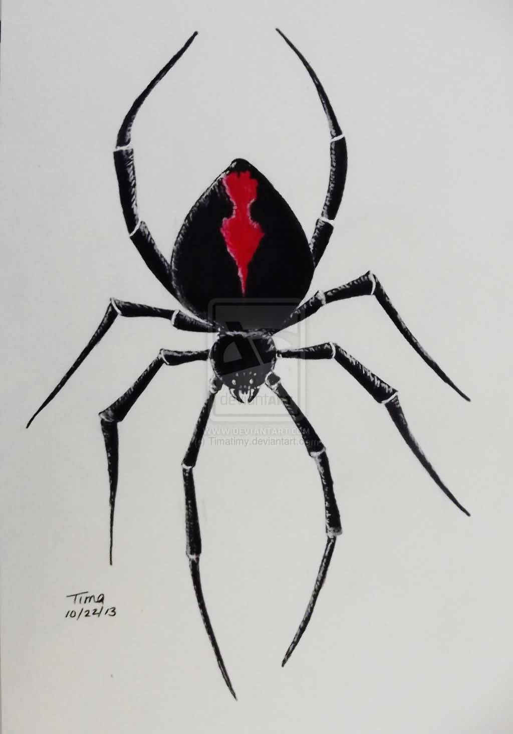 Timatimy Design A Nice One Black Widow Spider Tattoo