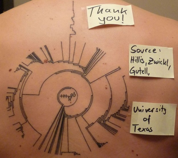 Upper Back Amazing Biology Science Phylogenetic Tree Of Life Tattoo