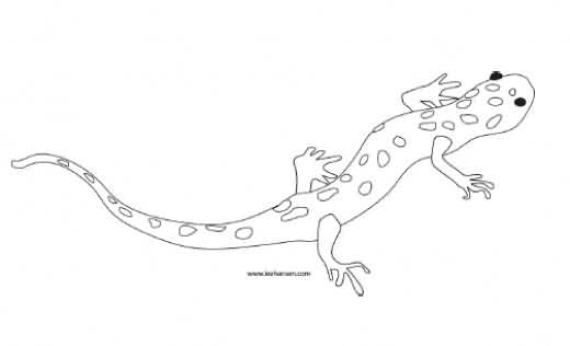Weird Salamander Tattoo Drawing Stencil