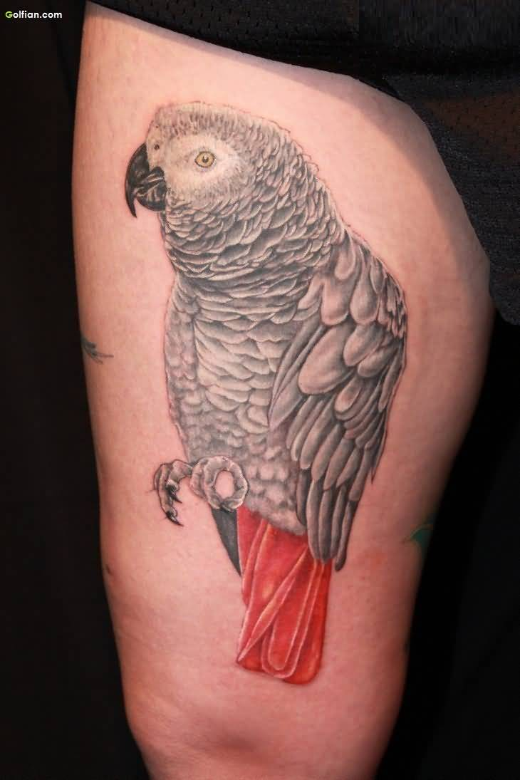 African Tattoo Of Parrot